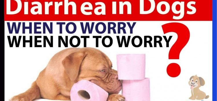 Diarrhea in dogs bullyade home treatment