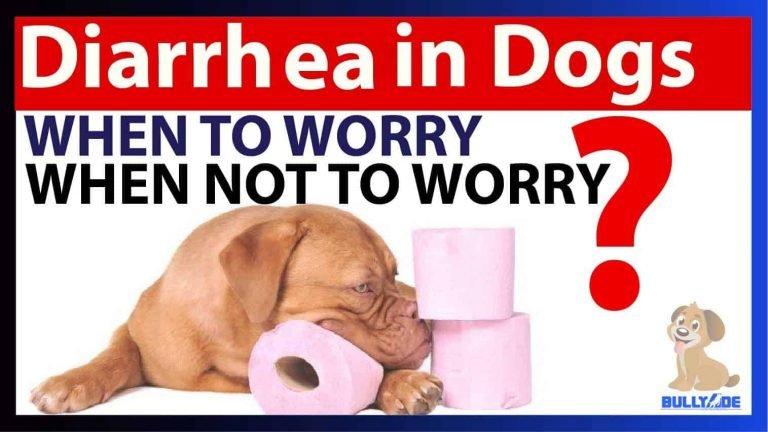 Diarrhea in dogs bullyade home treatment