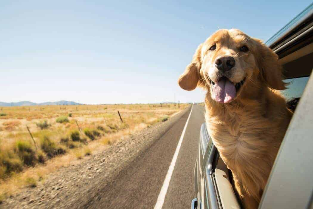 electrolytes for dogs