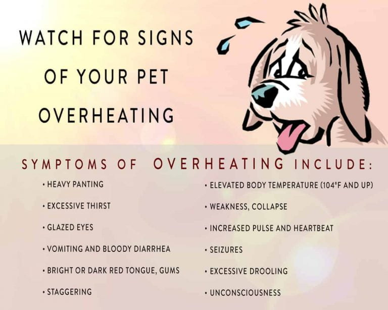 heat exhaustion in dogs bullyade treatment