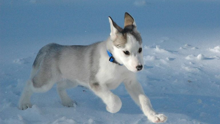 Vitamins for dogs Electrolytes for dogs