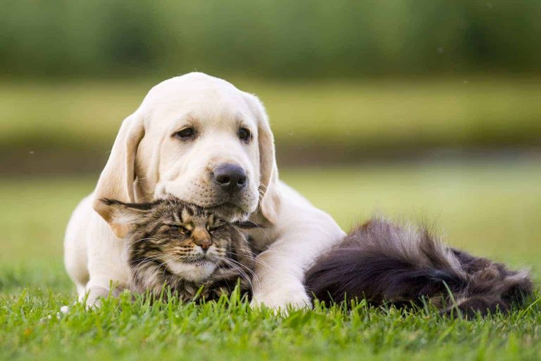 Thiamin/Vitamin B1: Why Your Dog Needs It