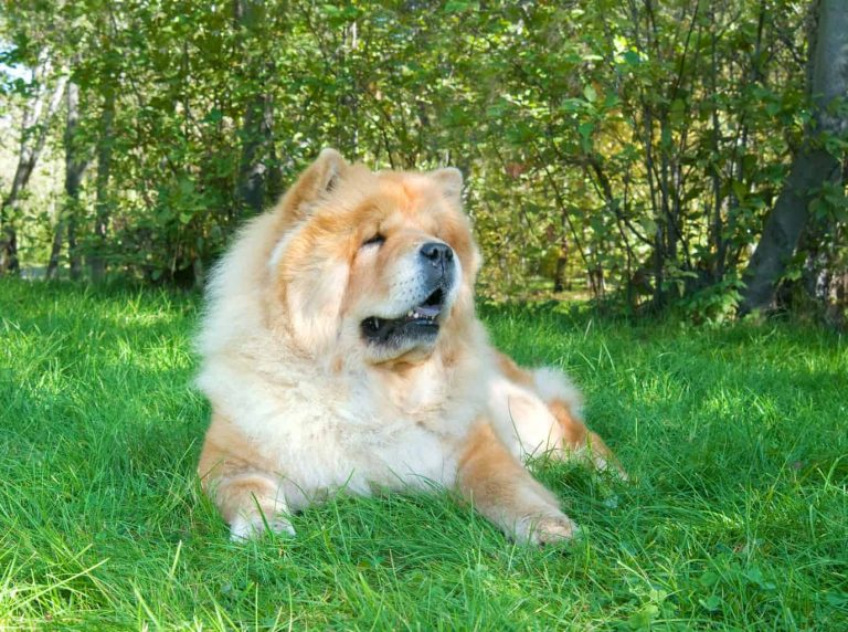 benefits of vitamins for dogs copper for dogs