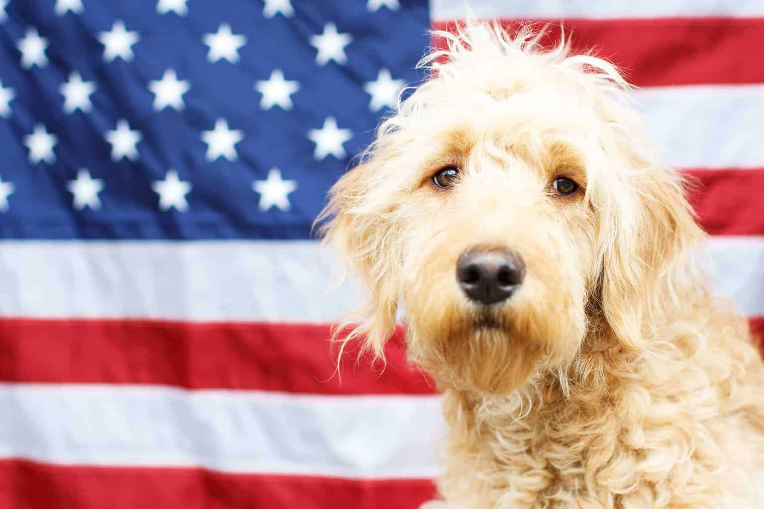Electrolytes and Vitamins for dogs