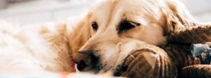 maganese for dog health benefits bullyade electrolytes for dogs
