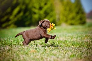 vitamin a for dogs
