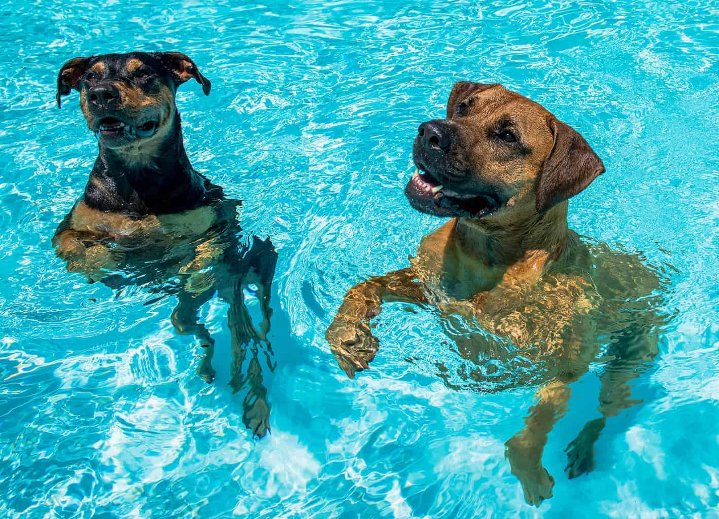 benefits of vitamin d for dogs