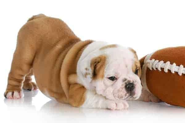 vitamin e for dogs