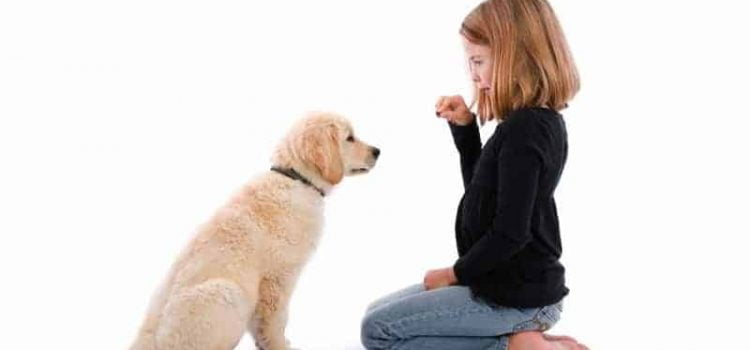 how to train your dog to sit and stay