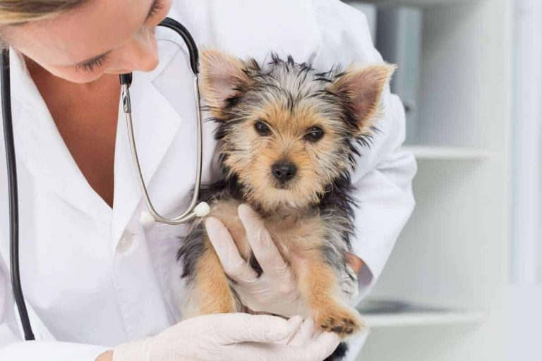 how to health check your dog at home