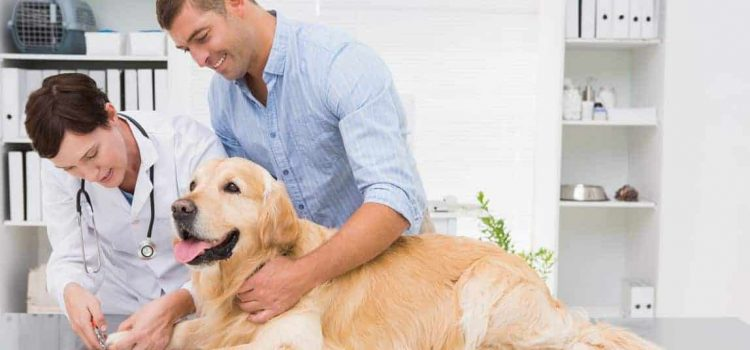 home treatment for dog skin problems