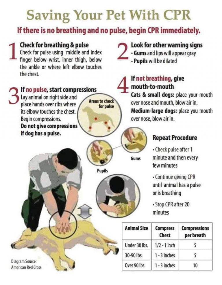 perform cpr on dogs how to perform cpr for dogs