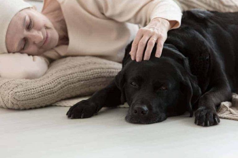 benefits of a therapy dog