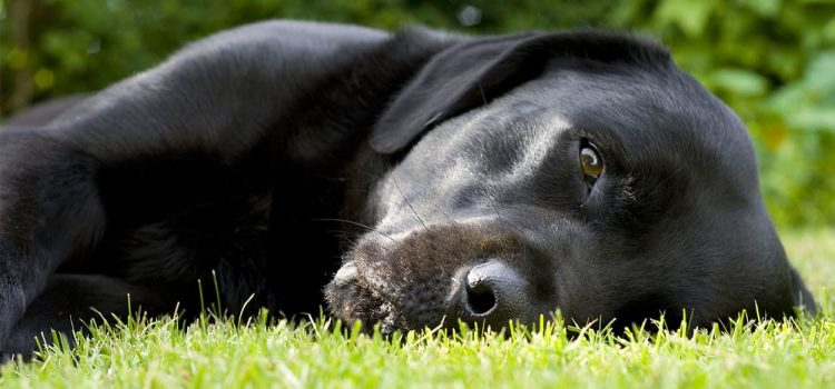 how to treat a urinary tract infection in dogs