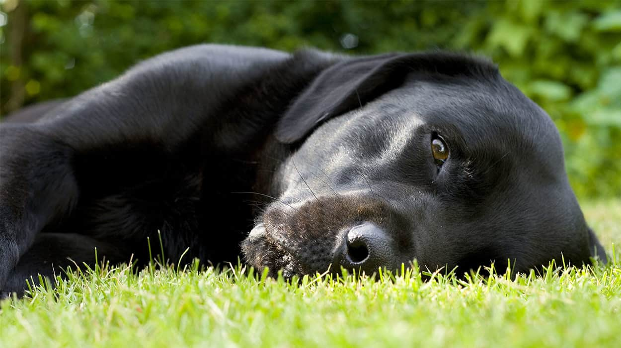 How To Treat E Coli Infection In Dogs