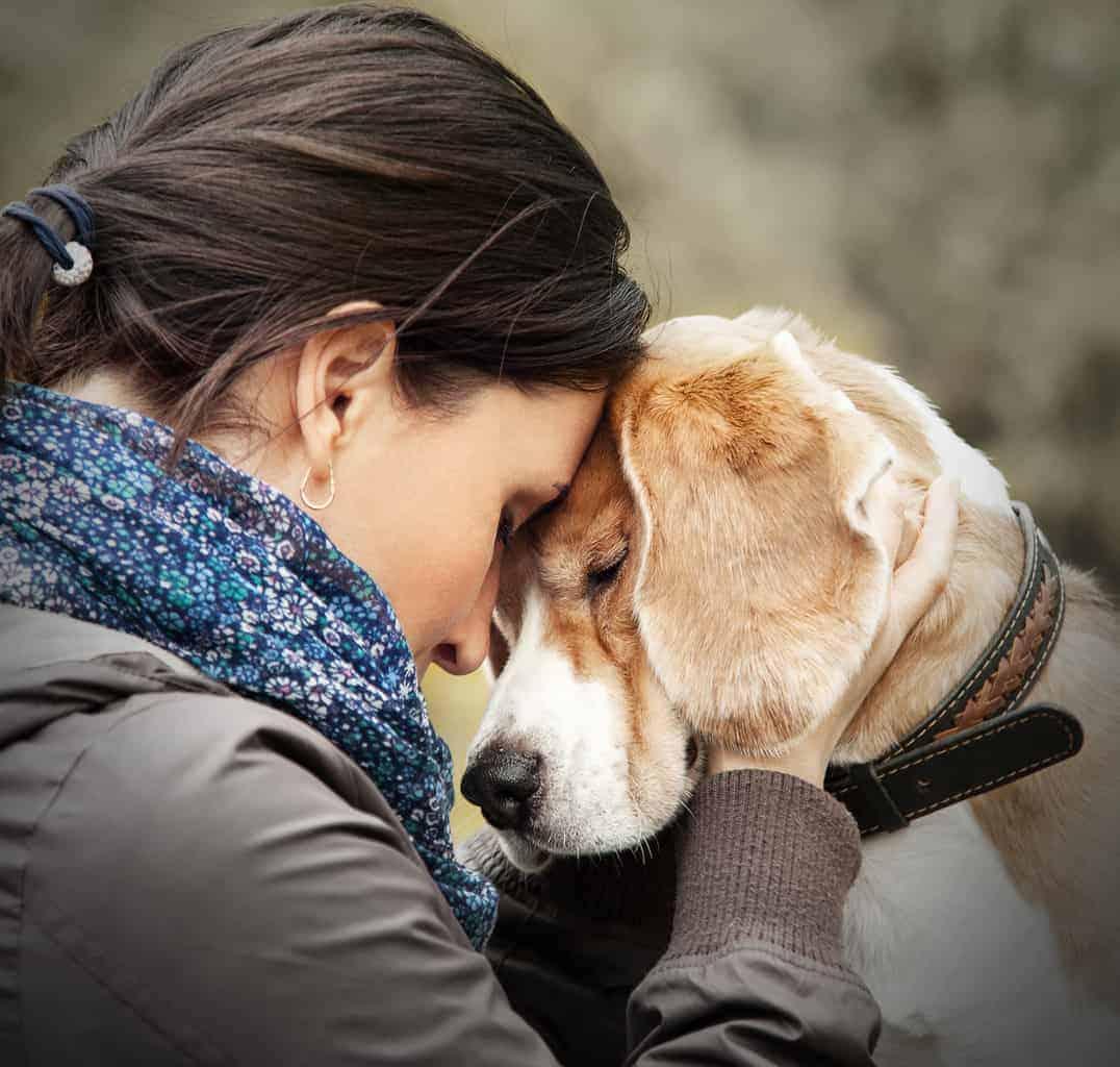 DOGS LOVE BULLYADE