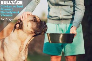 Electrolytes for dogs vitamin supplement for dogs