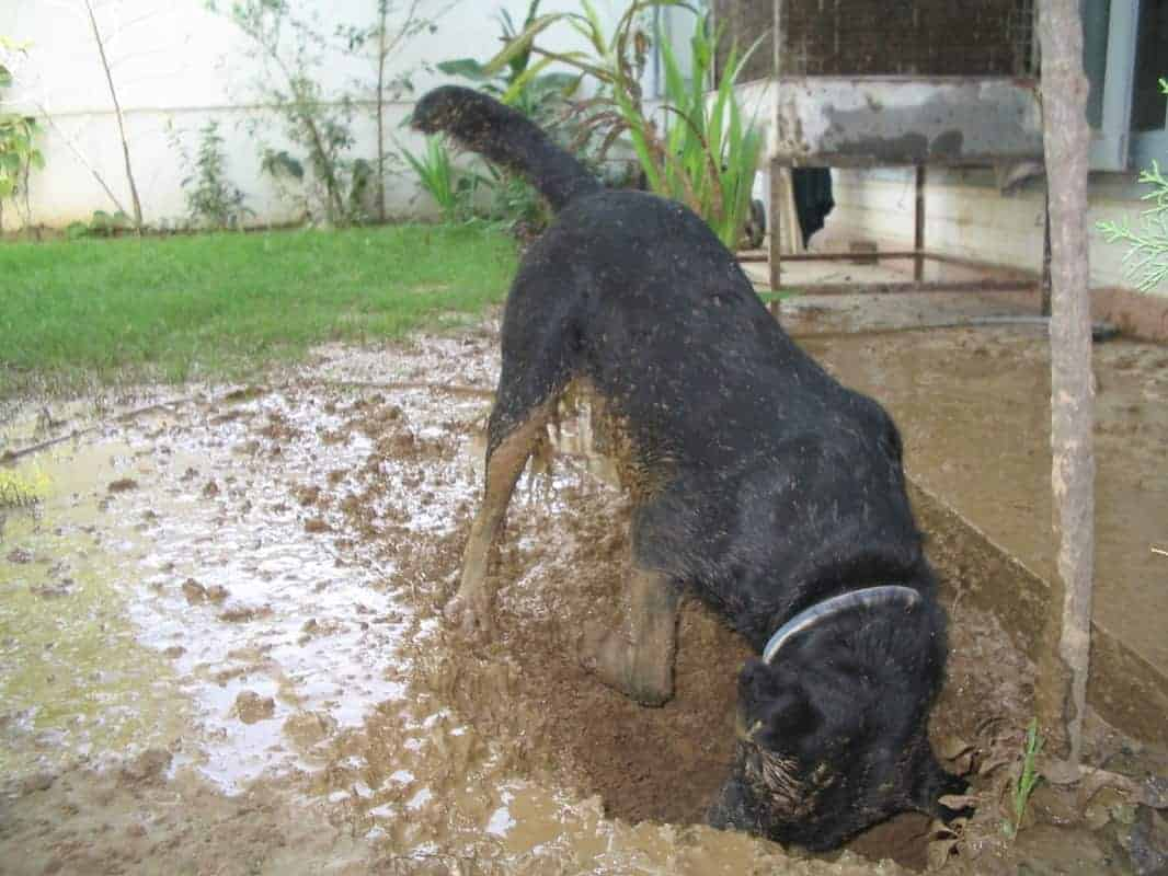How to Stop Your Dog from Digging Holes in the Yard