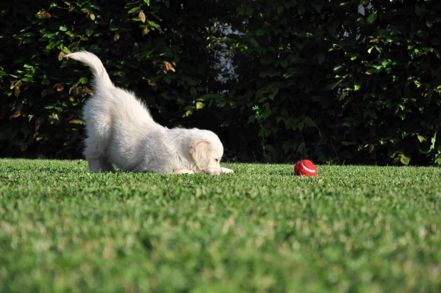 dog vitamins bullyade
