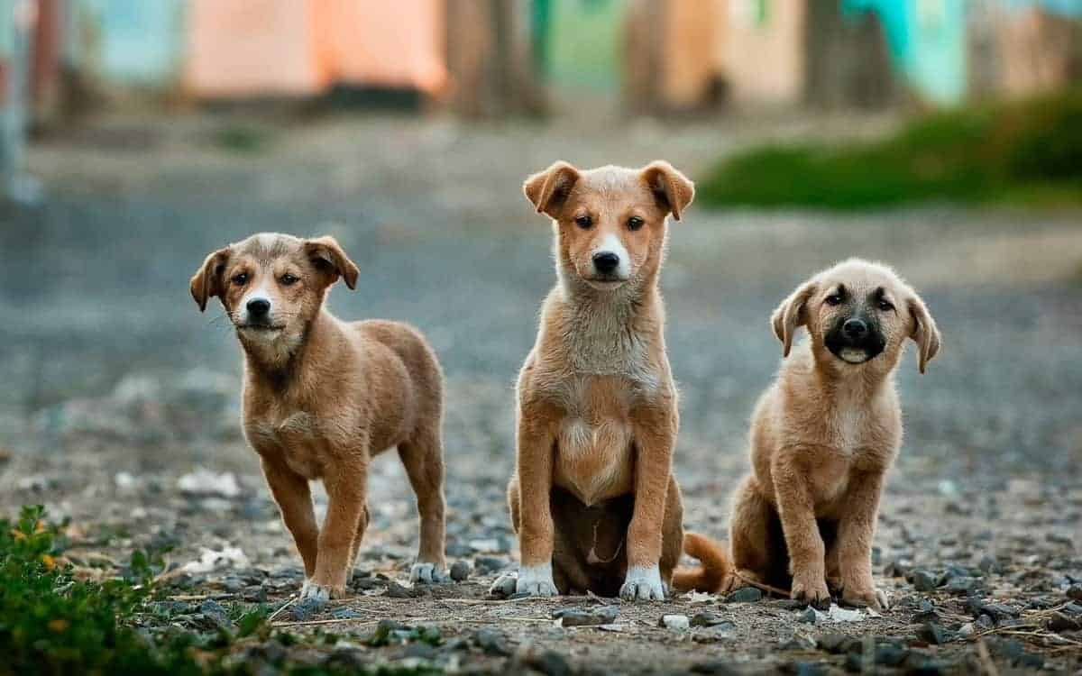how to approach a stray dog