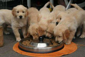SKINNY DOGS