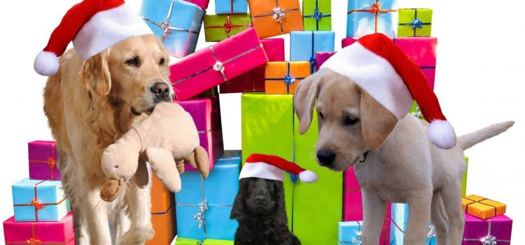Top 20 GIFTS FOR DOGS