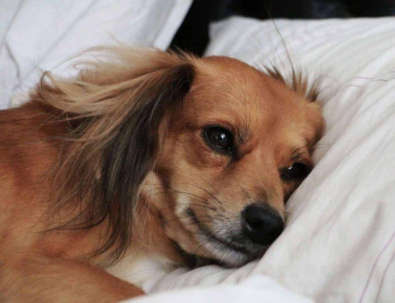 winter depression in dogs