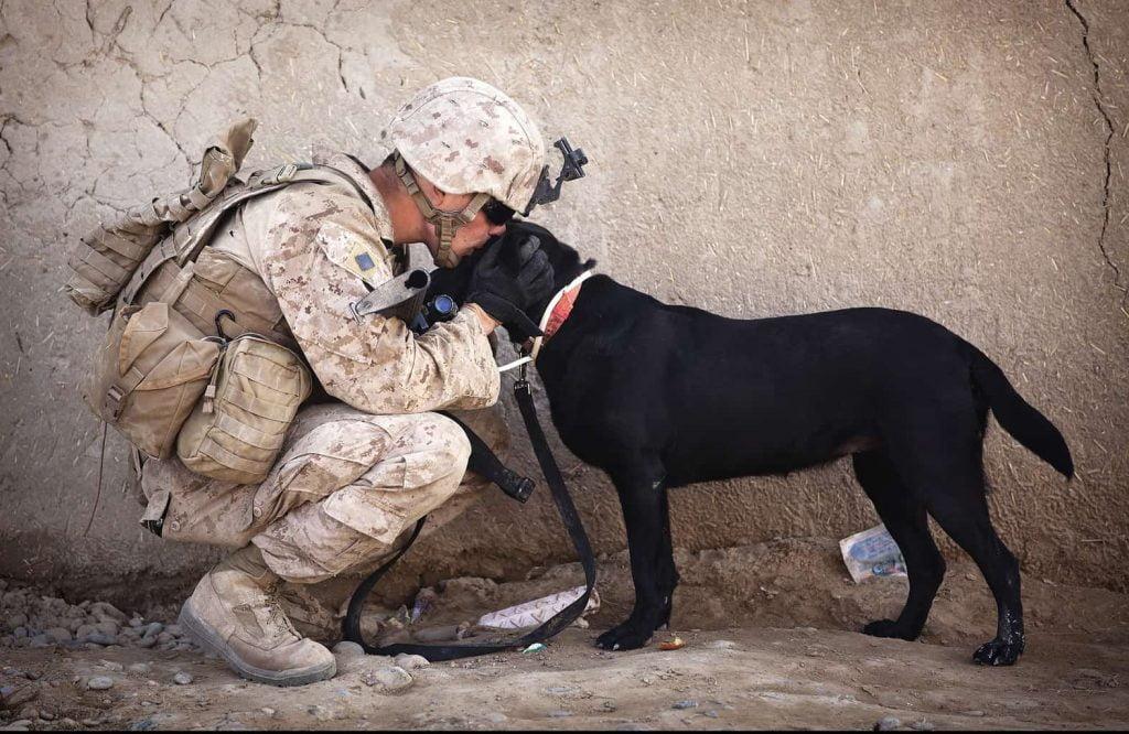 ex-service dog