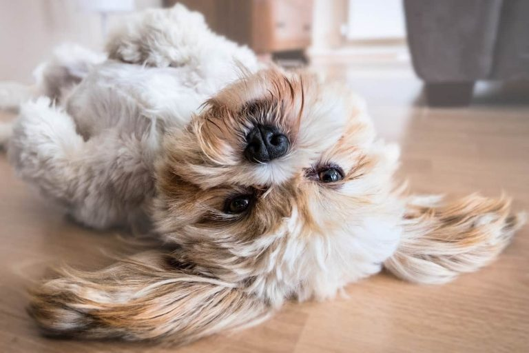 Number One Thing You Must Do to Keep Your Dog's Hair Shiny