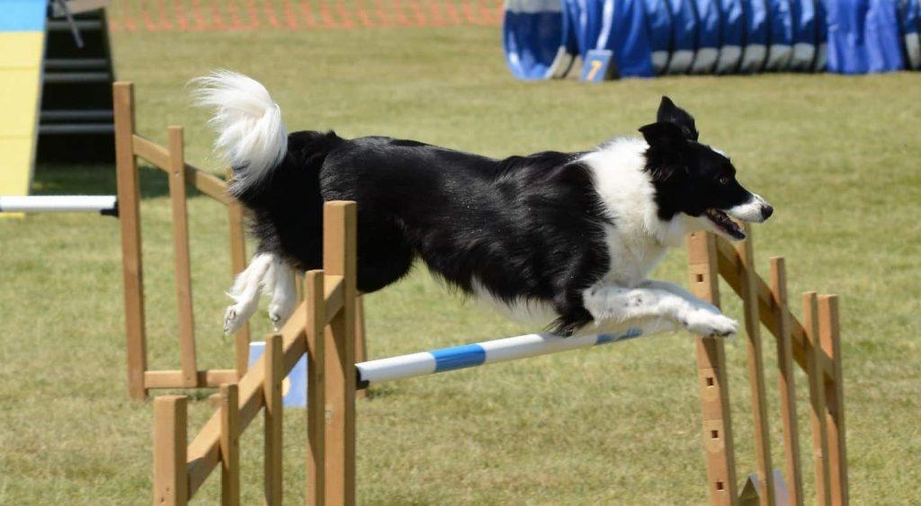 Best Dog Exercise Equipment