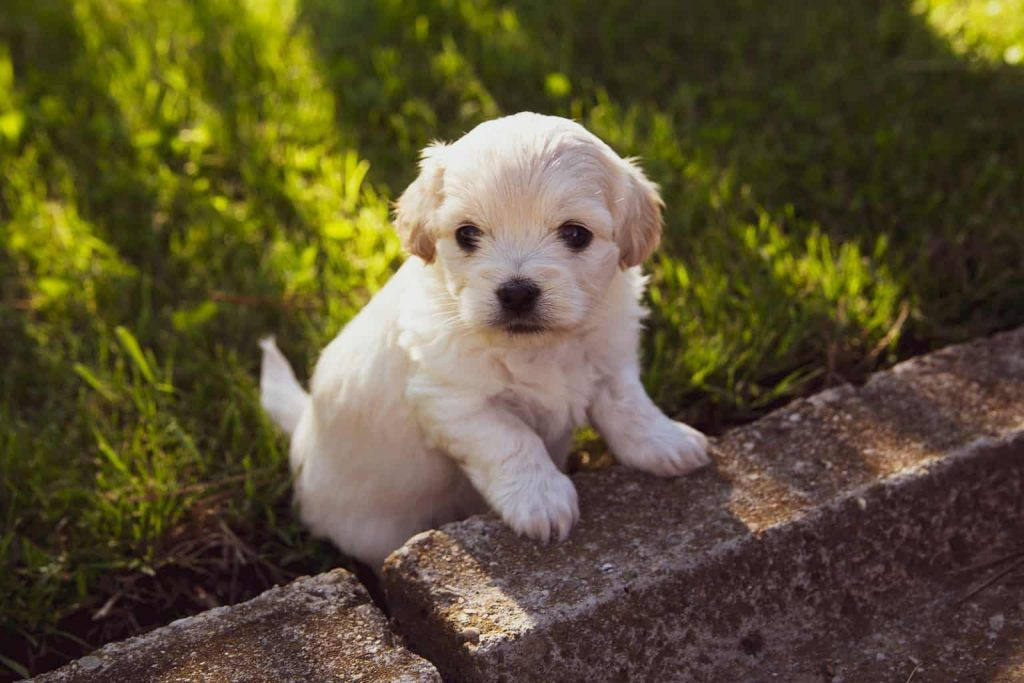 best vitamins for newborn puppies