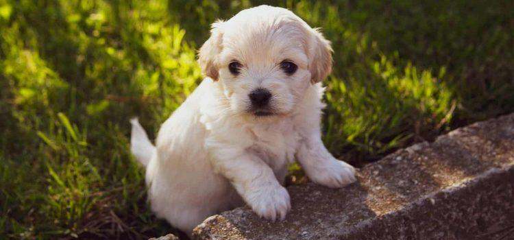best vitamins for newborn puppies