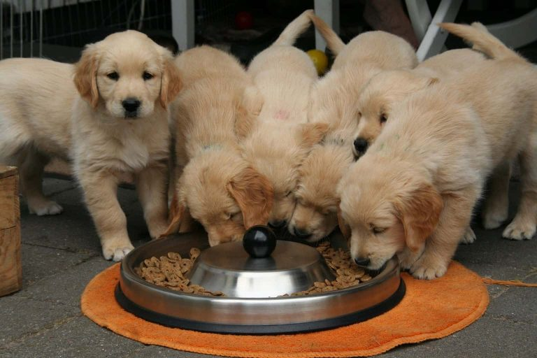 Is Your Dog's Grain-Free Diet Making Him Sick?