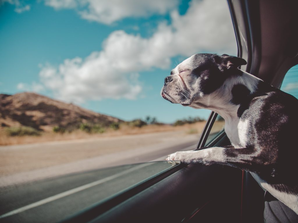car sickness in dogs