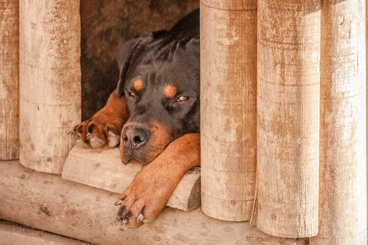 dog inside kennel kennel cough