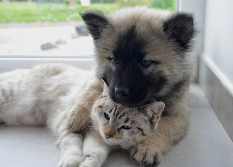 introduce a dog to a cat